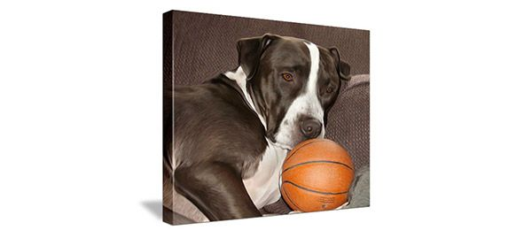 canvas of brown and white dog with basketball