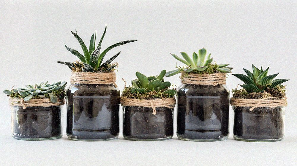 a collection of succulents in jars with dirt and twine