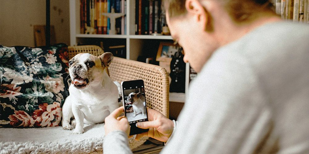 person taking an iphone photo of a french bulldog
