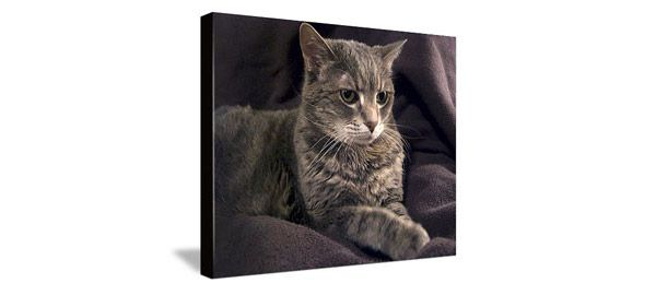 canvas of grey tabby cat sitting on brown blanket