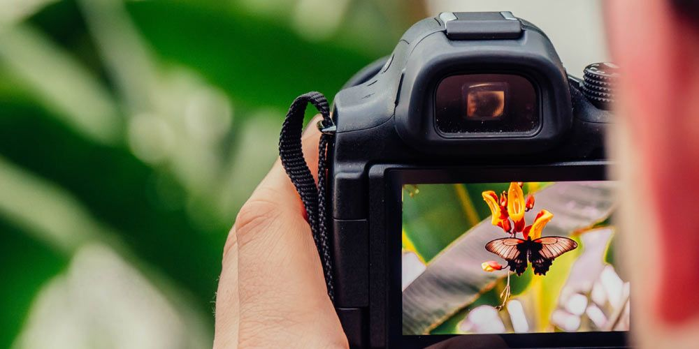 close up of a hand holding a digital camera with a photo of a black and orange butterfly on an orange flower in the display